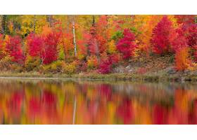 地球,反射,自然,水,森林,秋天,壁纸,图片