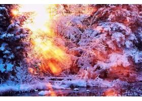 地球,冬天的,阳光,树,壁纸,图片