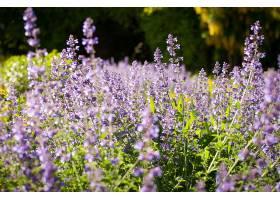 地球,淡紫色,花,壁纸,(38)