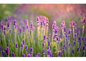 地球,淡紫色,花,壁纸,(10)