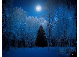 地球,冬天的,蓝色,树,森林,月球,圣诞节,树,壁纸,图片