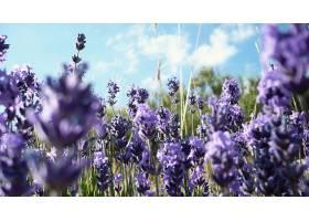 地球,淡紫色,花,壁纸,(2)