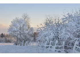 地球,冬天的,雪,树,栅栏,严寒,壁纸,