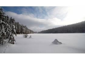 地球,冬天的,雪,森林,壁纸,(1)图片