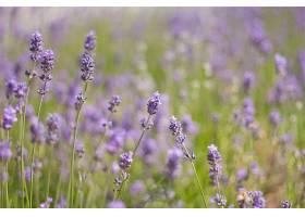 地球,淡紫色,花,壁纸,(8)