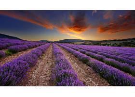 地球,淡紫色,花,花,壁纸,(2)