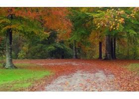 地球,秋天,壁纸,(56)