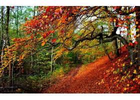 地球,秋天,木材,树,叶子,壁纸,图片