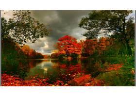 地球,秋天,池塘,自然,树,壁纸,图片