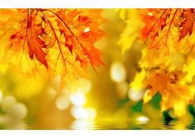 地球,秋天,自然,叶子,Bokeh,壁纸,图片