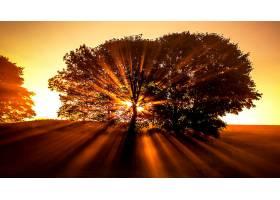 地球,阳光,自然,树,橙色的,壁纸,图片