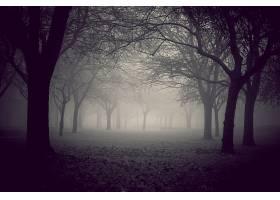 地球,雾,自然,树,风景,壁纸,图片