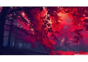 地球,森林,壁纸,(315)