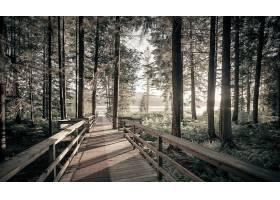 地球,森林,壁纸,(442)