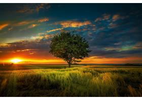 地球,日落,自然,寂寞的,树,树,夏天,领域,阳光,云,壁纸,图片