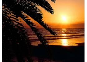地球,日落,自然,海滩,手掌,树,海,反射,壁纸,图片