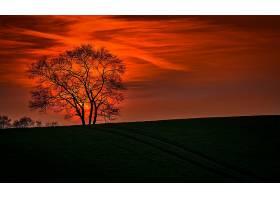 地球,日落,自然,风景,云,橙色的,寂寞的,树,壁纸,图片
