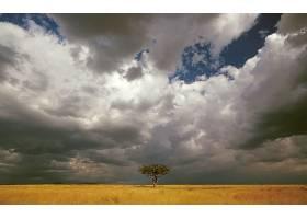 地球,树,树,壁纸,(56)