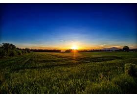 地球,日落,领域,自然,夏天,日出,阳光,绿色的,草,壁纸,图片