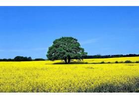 地球,树,树,领域,草地,天空,快活的,黄色,花,夏天,壁纸,图片