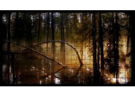 地球,森林,壁纸,(175)图片