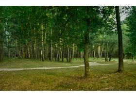 地球,森林,壁纸,(177)图片