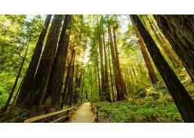 地球,森林,壁纸,(178)图片