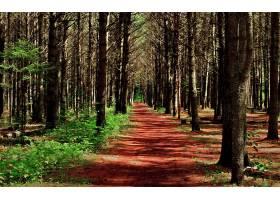 地球,森林,壁纸,(179)图片