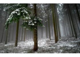 地球,森林,壁纸,(18)图片