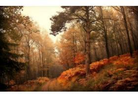 地球,森林,壁纸,(180)图片