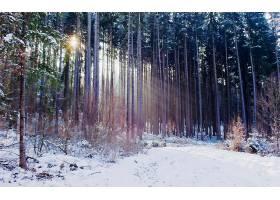 地球,森林,壁纸,(181)图片