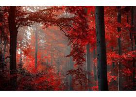 地球,森林,壁纸,(182)图片