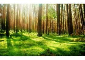 地球,森林,壁纸,(184)图片