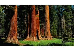 地球,森林,壁纸,(185)图片