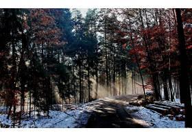 地球,森林,壁纸,(186)图片