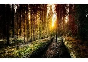 地球,森林,壁纸,(189)图片