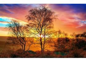 地球,日落,树,彩色,壁纸,