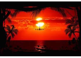 地球,日落,树,飞机,手掌,树,云,飞行,晚上,壁纸,图片