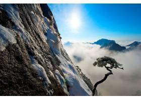地球,树,树,冬天的,壁纸,(2)图片