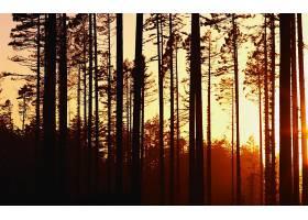 地球,森林,壁纸,(131)
