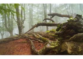 地球,森林,壁纸,(146)图片