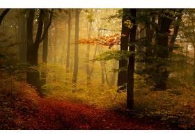 地球,森林,壁纸,(151)图片