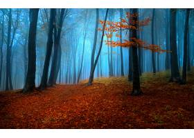 地球,森林,壁纸,(153)图片