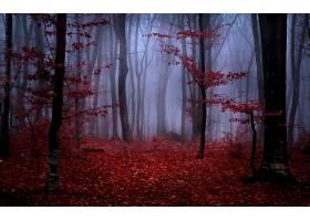 地球,森林,壁纸,(154)图片
