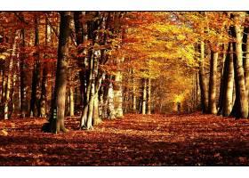 地球,森林,壁纸,(157)图片