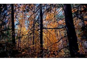 地球,森林,壁纸,(158)图片