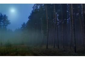 地球,森林,壁纸,(16)图片