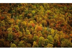 地球,森林,壁纸,(161)图片