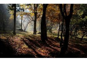 地球,森林,壁纸,(162)图片