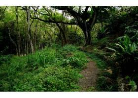 地球,森林,壁纸,(165)图片